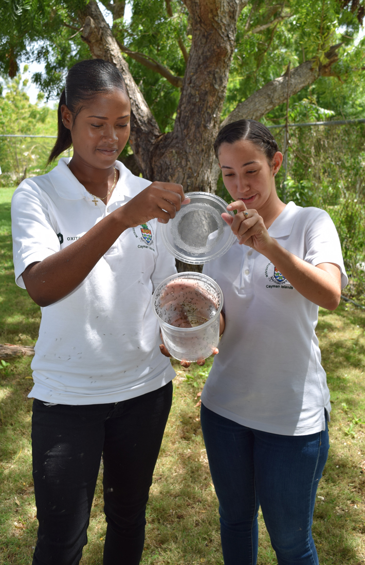 "L-r: Giselle Johnson and Heidi Groves, who work on the mosquito programme, open pots of genetically modified ""Friendly Aedes aegypti mosquitoes""."