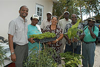 Minister of District Administration, Works, Lands and Agriculture the Hon. Juliana O'Connor-Conolly, JP (centre) presents plant material to farmers Alida Scott (second left) and Irvin Forbes (second right, foreground).  The farmers were recently predial larceny victims.   Others from left include: Department of Agriculture Director Adrian Estwick; DoA Farm Labourer Audley Chambers; Agronomist Raymond Coleman and DoA Farm Labourer Devon Stewart.