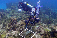 Darwin Initiative researchers surveyed Cayman's reefs this past year.