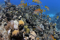 Healthy reefs are typically home to teeming marine life.